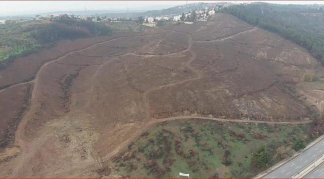 Yanan 36 hektar alan ağaçlandırılacak