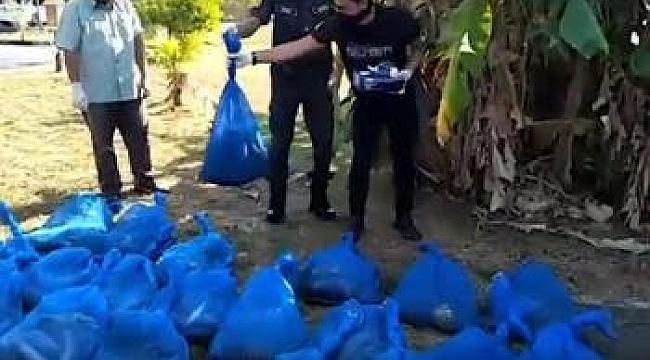 Malezya'da 154 kobra yılanı yakaladılar