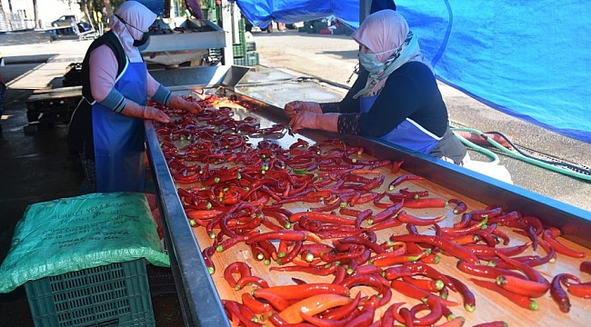 Kadınların ürettiği salçalar, Hollanda'ya ihraç ediliyor